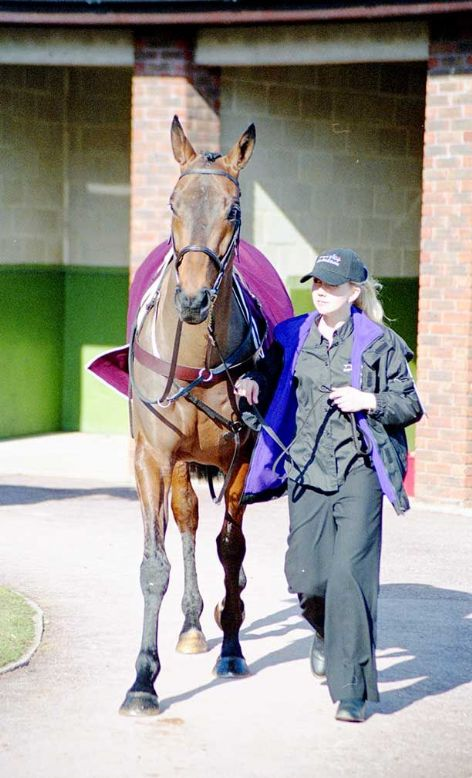 Racehorse Baracouda with Jockey A P McCoy